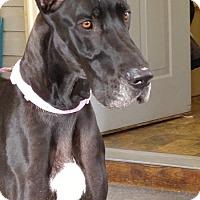 Adopt A Pet :: Gigi - Boonton, NJ