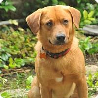 Adopt A Pet :: General - San Antonio, TX