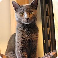 Adopt A Pet :: Mo - Carlisle, PA