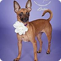 Adopt A Pet :: Laika - Medford, NJ