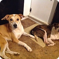 Adopt A Pet :: Ginger (courtesy listing) - Bartonsville, PA