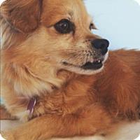 Adopt A Pet :: Marley - Redondo Beach, CA