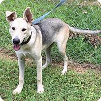 Adopt A Pet :: Emmy - Allentown, PA