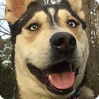 Adopt A Pet :: MYSTIQUE - Powder Springs, GA