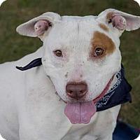 Adopt A Pet :: Rocco - Flint, MI