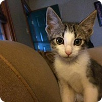 Adopt A Pet :: Jack - Wichita, KS