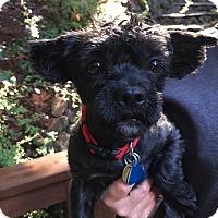 Adopt A Pet :: JAGGER - Emeryville, CA