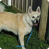 Adopt A Pet :: Fenrir - Christiana, TN