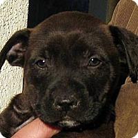 Adopt A Pet :: Baby Niblet - Oakley, CA