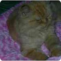 Adopt A Pet :: Manhattan - Columbus, OH