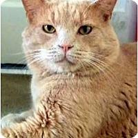 Adopt A Pet :: Mr. Wonderful - Alexandria, VA