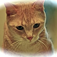 Adopt A Pet :: Skeeter - Alexandria, VA