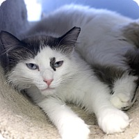 Adopt A Pet :: Twilight Mist - Chicago, IL