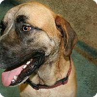 Adopt A Pet :: Kilo - Lufkin, TX