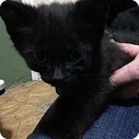 Adopt A Pet :: Melt - Caistor Centre, ON