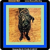 Adopt A Pet :: Charlie - Milton, GA