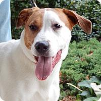 Adopt A Pet :: Meeka - Courtesy Listing - Sparta, NJ