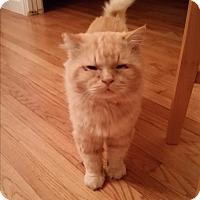 Adopt A Pet :: Teddy - Modesto, CA
