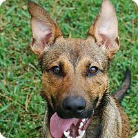 Adopt A Pet :: Elvis - Ormond Beach, FL