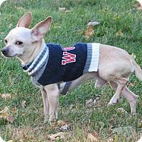 Adopt A Pet :: Peanut - Albert Lea, MN