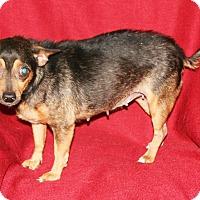 Adopt A Pet :: Jilly - Umatilla, FL
