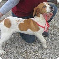 Adopt A Pet :: Sam - Sparta, NJ