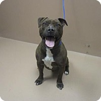 Adopt A Pet :: MAXIMUS - Reno, NV