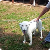 Adopt A Pet :: Weiss - Lebanon, ME