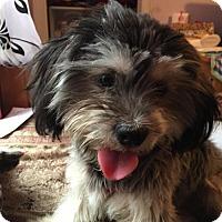 Adopt A Pet :: Booker - Lakewood, CA
