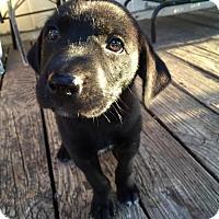 Adopt A Pet :: Dora the Explorer - Brooklyn, NY