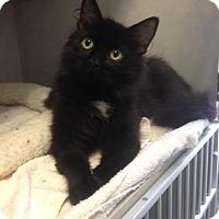 Adopt A Pet :: Bianca - Cashiers, NC