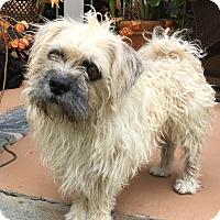 Adopt A Pet :: Scruffers - Santa Ana, CA