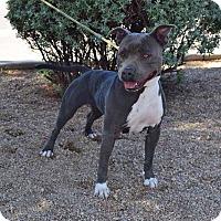 Adopt A Pet :: Krystle - Sierra Vista, AZ
