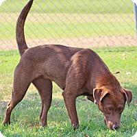 Adopt A Pet :: Zaine - Savannah, TN