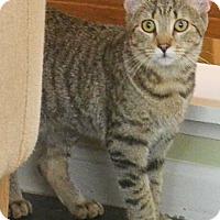 Adopt A Pet :: Valkyrie - Reston, VA