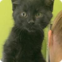 Adopt A Pet :: WIGGY - Hibbing, MN