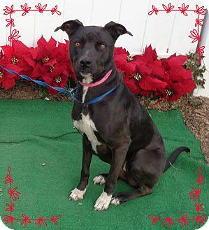 Labrador Retriever Mix Dog for adoption in Marietta, Georgia - REMY