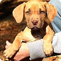 Adopt A Pet :: Aspen~adopted! - Glastonbury, CT