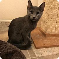Adopt A Pet :: TJ - Austin, TX