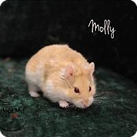 Adopt A Pet :: Molly - Topeka, KS