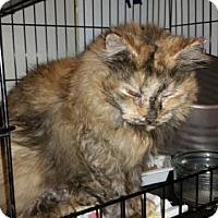 Adopt A Pet :: Mona Lisa - Glendale, AZ
