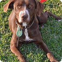Adopt A Pet :: Eve - Beaumont, TX