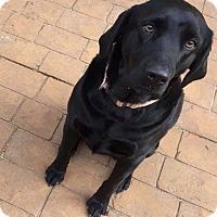 Adopt A Pet :: Ashes - Santa Clarita, CA