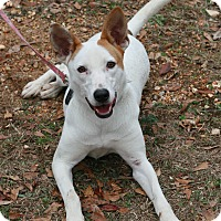 Adopt A Pet :: Maddy - Attalla, AL