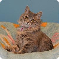 Adopt A Pet :: Phyllis - Cincinnati, OH
