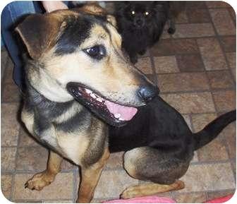 German Shepherd Dog Mix Dog for adoption in Glendale, Arizona - Coco