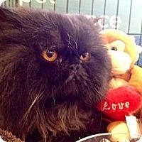 Adopt A Pet :: Sasha - Beverly Hills, CA