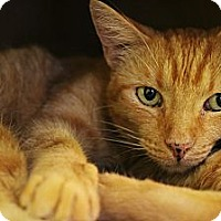 Adopt A Pet :: McLovin' - Mobile, AL