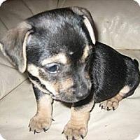 Adopt A Pet :: Sky - Phoenix, AZ