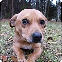Adopt A Pet :: Emmit - Mocksville, NC
